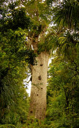 Tane Mahuta - God of the Forest by tavaril