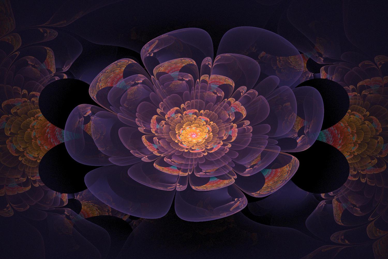 Flower-npolar by amrida