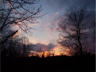 Tree to sky by Photo-Opp