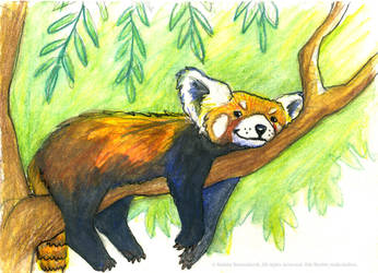 Red Panda / Firefox by ladameblanche