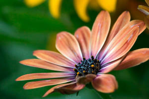 Pastel... by Seb-Photos