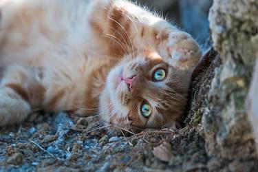 High five buddy! by Seb-Photos