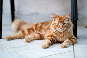 Kitty has grown! by Seb-Photos