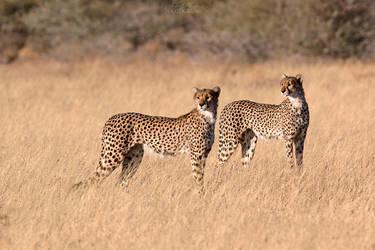 Botswana 2015 - Brothers by Seb-Photos