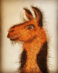 Fredrick the Llama by mcbride75