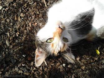 Cat by JaNuLiEnKa