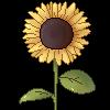 funflower by T-E-R-R-I-F-I-E-D