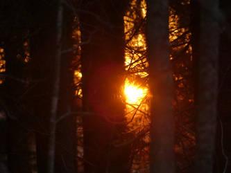 Sun.. by Makkex