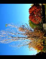 Last Living Leaves by FramedByNature