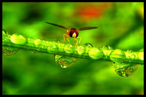 Fragility At Rest by FramedByNature