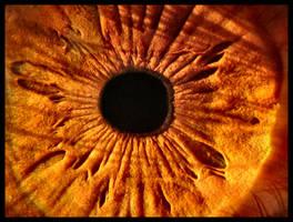 Full Frame Eye by FramedByNature
