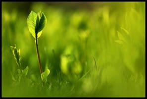 Spring Forth III by FramedByNature