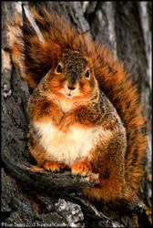 Squirrel Portraiture by FramedByNature