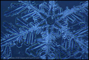 Inner Dendrite Structure III by FramedByNature