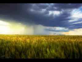 Precip Over Wheat by FramedByNature