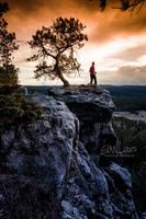 64: Black Hills Bonsai by FramedByNature