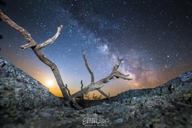 Black Hills Bristlecone by FramedByNature
