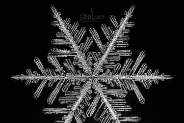 Stellar Asymmetry by FramedByNature