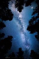 The Celestial Canopy by FramedByNature