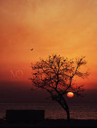 Trees, birds by MoThEeR-212