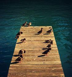 Ducks by MoThEeR-212