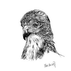 Hawk21-AHHH SHES SO CUTE by EagleInBlueSky
