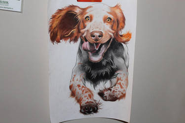 Russian Spaniel by RomulusArt