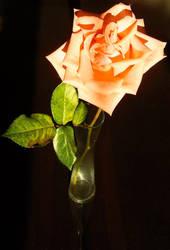 Orange Rose by SarcasticKitten7