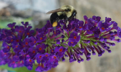 Bee and The Butterfly Bush 1 by kibbecat