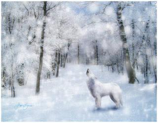 cry wolf by misstiffanymarie