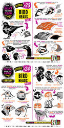How to draw BIRD HEADS tutorial by STUDIOBLINKTWICE