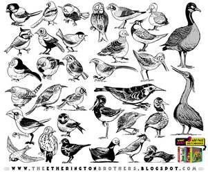 BIRDS REFERENCE MODEL SHEET! by EtheringtonBrothers
