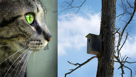 Bird House by weirdklown