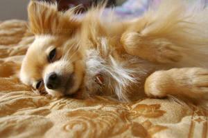 so sleepy by weirdklown