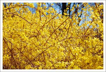 Yellow by SplitScreenShot