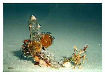 Aqua by dragonflytime