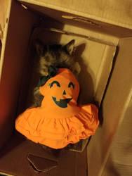 Little girl's new Halloween dress.  by princess-sweetflower