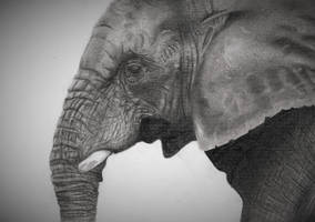 Elephant by Ebbenhorst