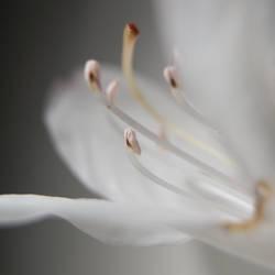 fleur blanche 2 by soetclo
