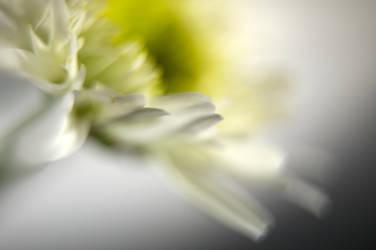 blanche by soetclo