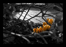 Spring is coming by SorenWrang