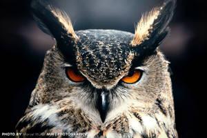Owl by Matzell