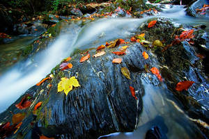 Wetfeet Creek by d-minutiv
