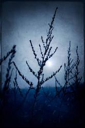 Fogged by blues by d-minutiv