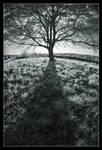 Shadow by d-minutiv