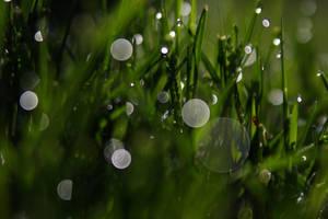 green green grass of home by mstargazer