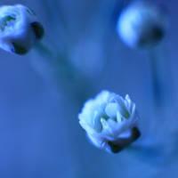 feeling a little blue by mstargazer