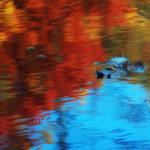 A puddle of colour by mstargazer