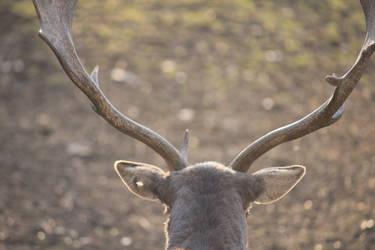 Deer daim by galhypette