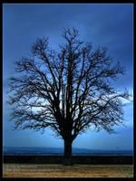 Blue Silence by DARK0NA